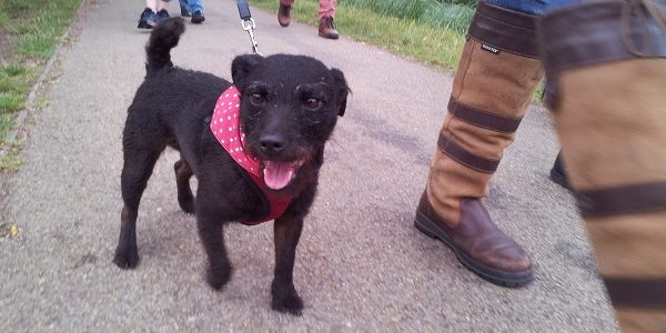 Photo of small dog besides walkers