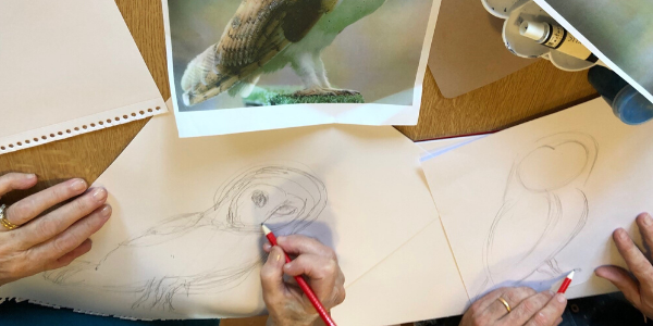 Owls fly to canvas in City Community Hospital