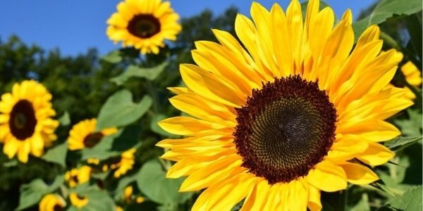 Operation Sunflower brings hope and joy to Community Services staff